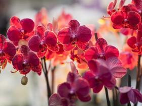 Орхидея12мл