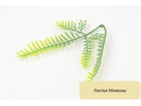Листья Мимозы