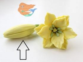 Бутон Золотой лилии