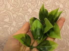 Листья роз