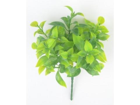 """Зелень """"Мандариновое дерево"""""""